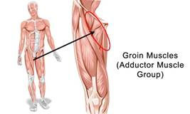 The Most Important Muscle You've Never Heard Of…Part 3 – The Adductor Group