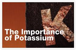 The Importance of Potassium